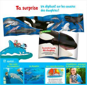 Un dépliant sur les cousins des dauphins. Texte : Bertrand Fichou. Illustration : Marion Vandenbroucke.